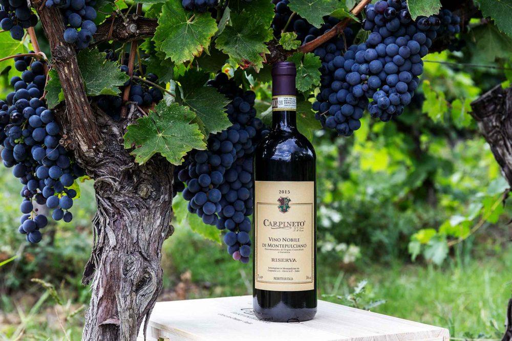 bottiglia vino con vigna e uva rossa